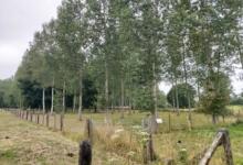 Landbouwgrond / weide / bos te koop Linter