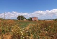 Agrarisch grondstuk van 16 ha te koop of te huur in Faro, Algarve