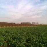 Kumtich, landbouwgrond te koop