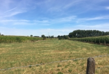 Landbougrond te koop in Merchtem