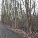 Bos van 1ha 30 tegen de straatkant