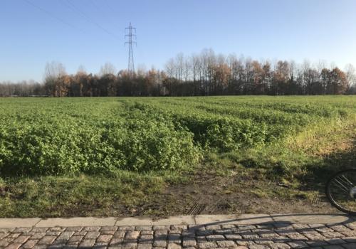 Bos Haverstraat Wijgmaal