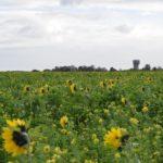 Landbouwgrond in Vlaams Brabant
