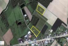 2 percelen landbouwgrond (fruitbomenplantage) te koop in Dormaal (Zoutleeuw)