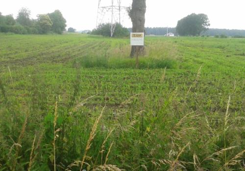 Landbouwgrond te Grote-Brogel