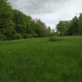 Prachtig in natuur gelegen weiland