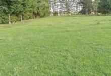 Landbouwgrond in Berlaar vrij van huur & pacht.