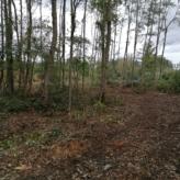 Bos te koop van 1ha70 in agrarisch gebied te Begijnendijk