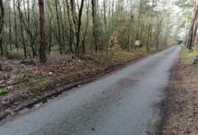 Mooi bos van 10900m² in Pelt.