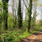 Vlot bereikbaar bos te Mere