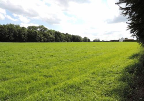 Mollem – Beneden Vrijlegem: een perceel weiland (± 2,5 hectare)
