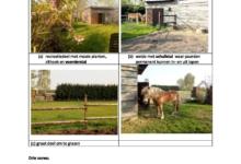 Weide met stalling voor paarden te Hijfte