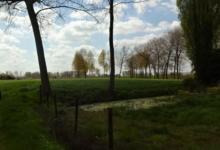Landbouwgrond ca. 1 ha in Kruibeke-Bazel