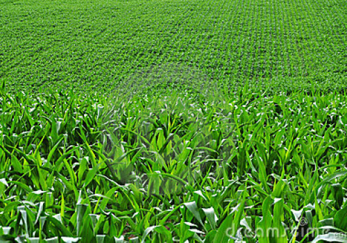 Boomgaard archieven landbouwgrond te kooplandbouwgrond for Landbouwgrond te koop oost vlaanderen