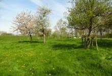 Weiland/boomgaard 3 500 m² te koop in Temse. Pachtvrij.