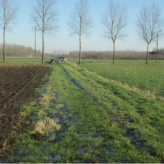 Landbouwgrond te koop te Wachtebeke