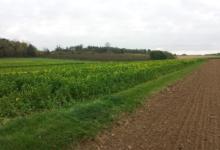 Landbouwgrond te koop ,Kortrijk-Dutsel
