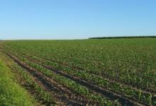 1,85 Ha Landbouwgrond te koop in Borgloon