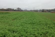 Opwijk, Waaienberg, 35a akkergrond te koop