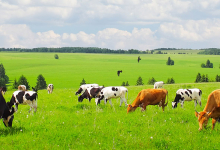 220 ha boerderij (landbouwbedrijf) in Polen te koop