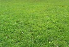 Nederland, Hardenberg, 1,9 ha weide te koop, pachtvrij