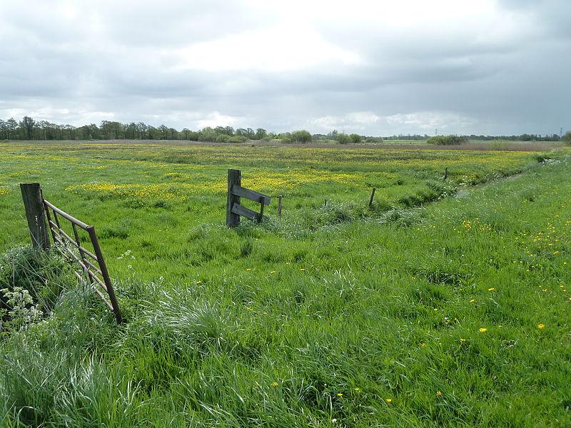 Weide te everbeek landbouwgrond te kooplandbouwgrond te koop for Weiland te huur