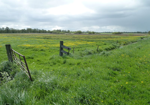 Landbouwgronden landbouwgrond te kooplandbouwgrond te koop for Weiland te huur