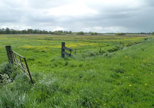 Weide archieven landbouwgrond te kooplandbouwgrond te koop for Huis te koop met weide